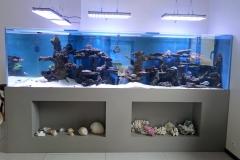 aquarium L récifal