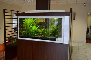 aquarium-salle-d'attente