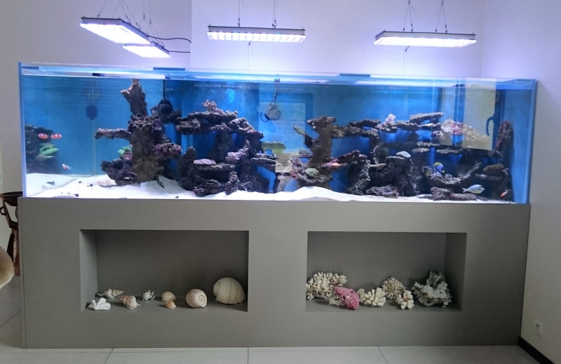 Aquarium location services fabrication installation et for Aquarium interieur
