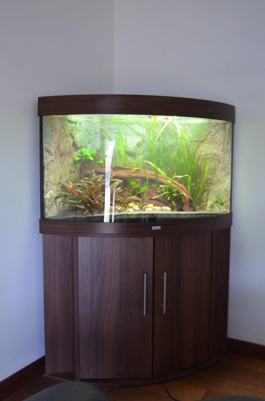 Aquarium d'angle juwel